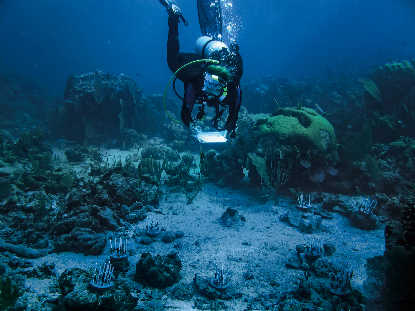 Scuba diver studying a reef