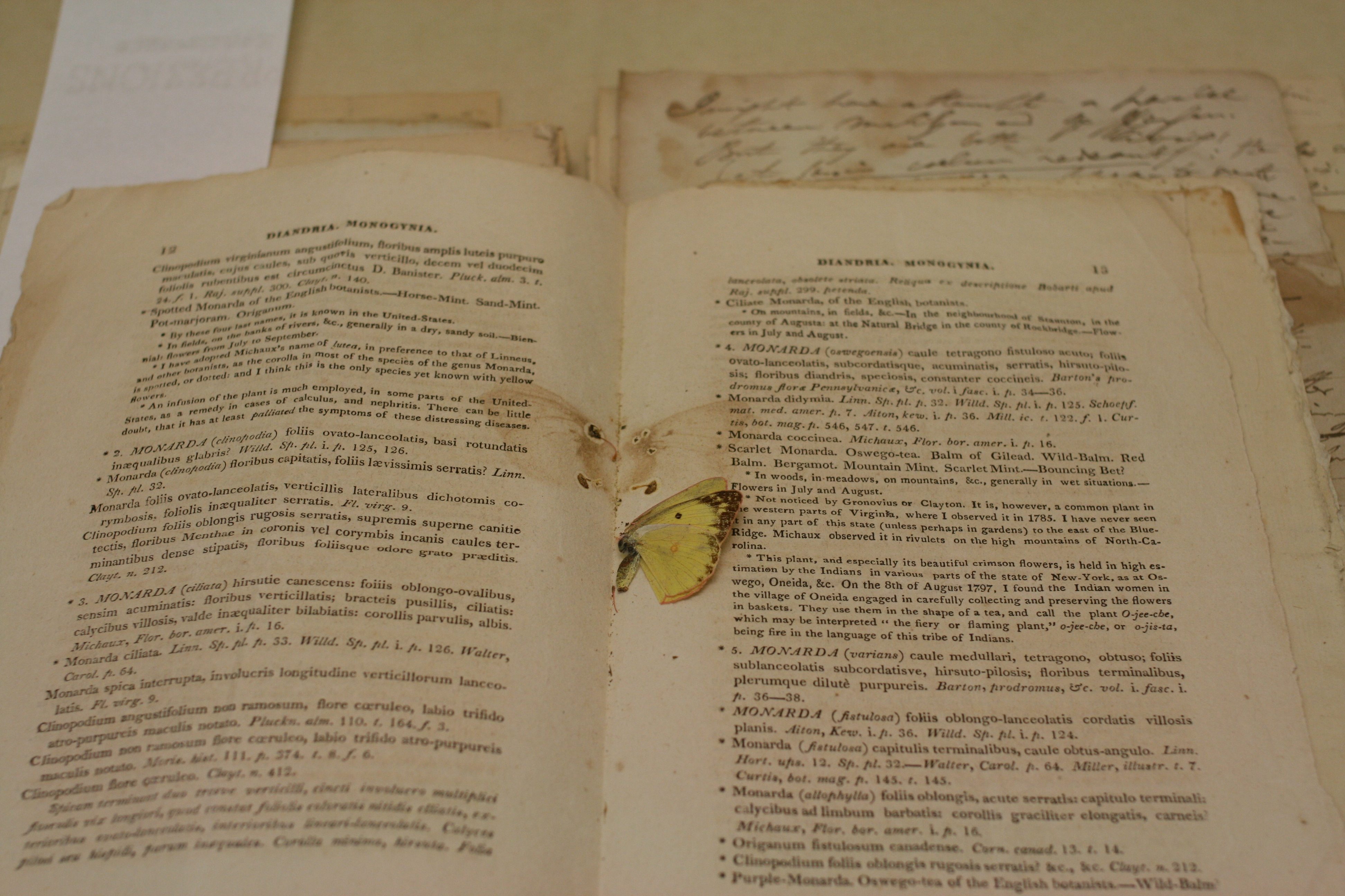wide image of yellow butterfly in book