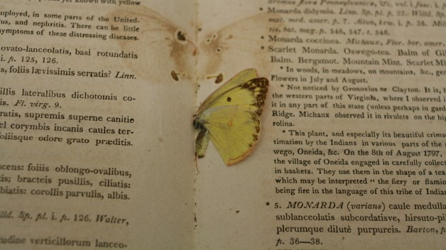 yellow butterfly pressed between pages of book