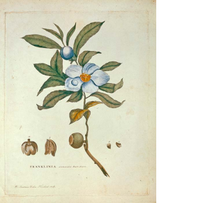 a blue and white flower surrounded by green leaves with its seeds magnified and the name of the title and author at the bottom of the page
