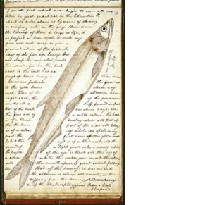 journal page with handwritten notes and drawing of a fish