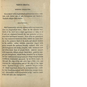 printed page from book describing Venus Grata (a type of clam)