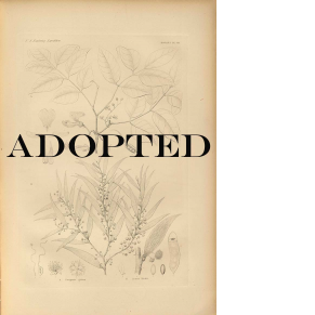 ADOPTED BOOK