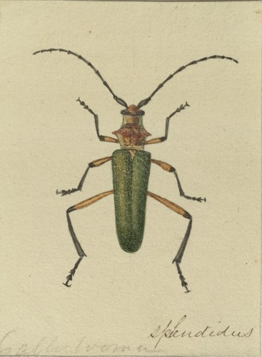 beetle with green body and reddish orange head, three sets of legs and antennae