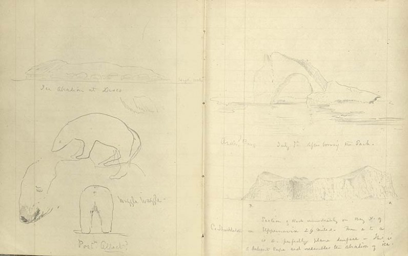 "notebook pages with drawings in pencil of icebergs and polar bears with various annotations including ""waggle waggle"" below the bears"