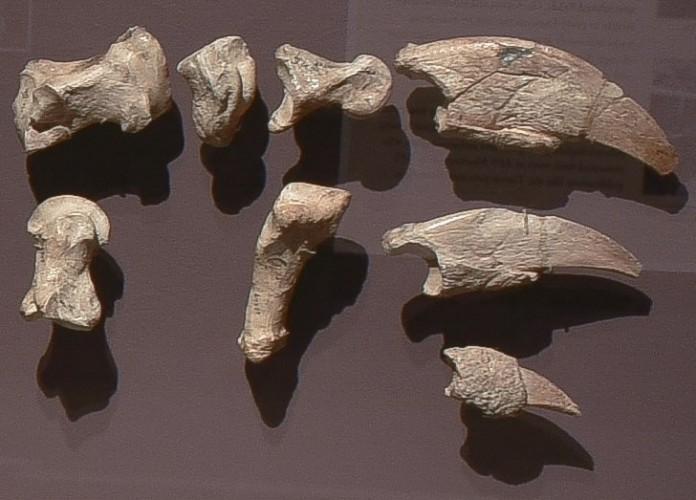 fossils on brown background