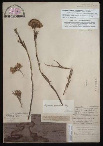 dried flower atop long stems attached to paper with notations and labels affixed