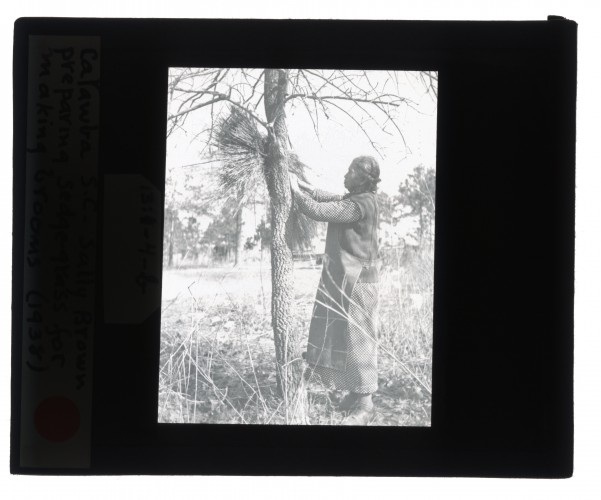 Black-and-white glass lantern slide of Sally Brown preparing sedge-grass for making brooms in Catawba, South Carolina.